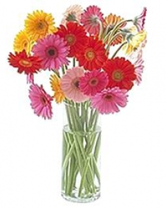 Assorted Gerbera's