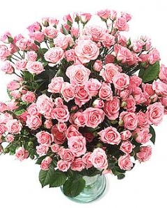 Blooming pink spray roses in vase
